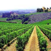 Vitivinicolo: pubblicato il bando della misura investimenti OCM vino