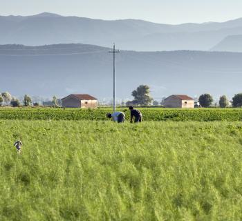 Agricoltura: Giunta proroga protocollo  sul contrasto al caporalato