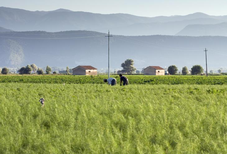 Extracomunitari al lavoro nei campi